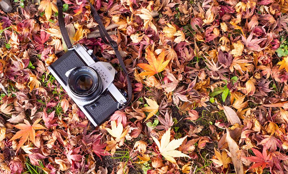 【京都女性カメラマンが教える】紅葉って何時が綺麗?混雑していない時間は?にお答えします。